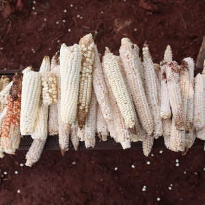 Sacred white corn is prepared for the Jerosy Puku ritual, which is held inside the Oga Pysy (Photo: Fabiana Fernandes)