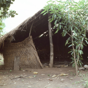 Farm shelter with mat walls and thatched roof, Banda area, 1982. (Photo: Ann B. Stahl)