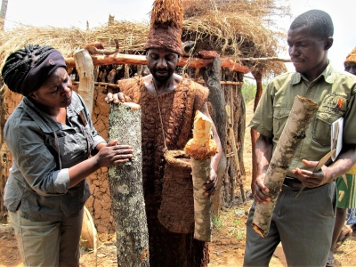 Bark cloth maker Mr Patrick Chanda discussing the EMKP bark cloth project with Perrice Nkombe and Stephen Mwila of the Moto Moto Museum  (Photo: Copyright Moto Moto Museum)