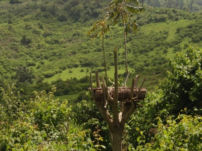 Traditional barrel beehive in stunted tree (Photo: Samuel Lunn-Rockliffe)