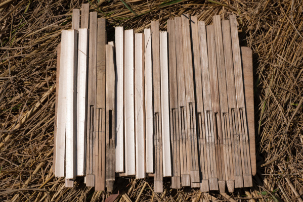 CHI Monivong's unfinished Angkuoch Russey instruments (bamboo Jew's harps), laid out for drying in the sun. Photo: Catherine Grant, 6 January 2020.